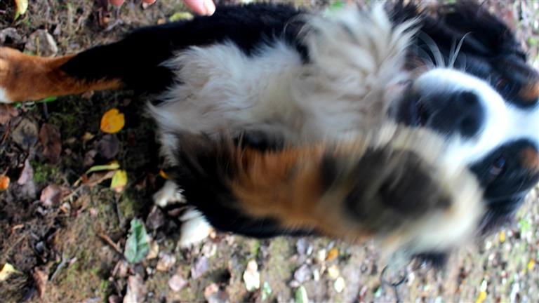 Katie Dog boarding, Pet Boarding, Dog Walking and Pet Sitting.