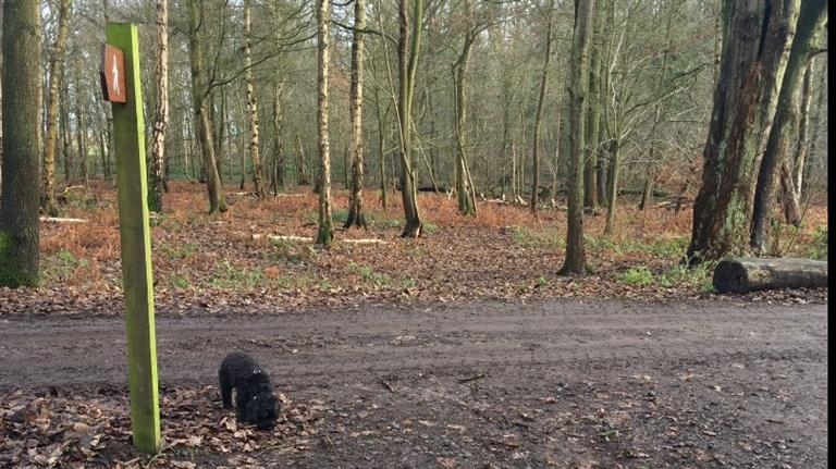 Harriet Dog boarding, Dog Walking and Pet Sitting, Pets Second Home.