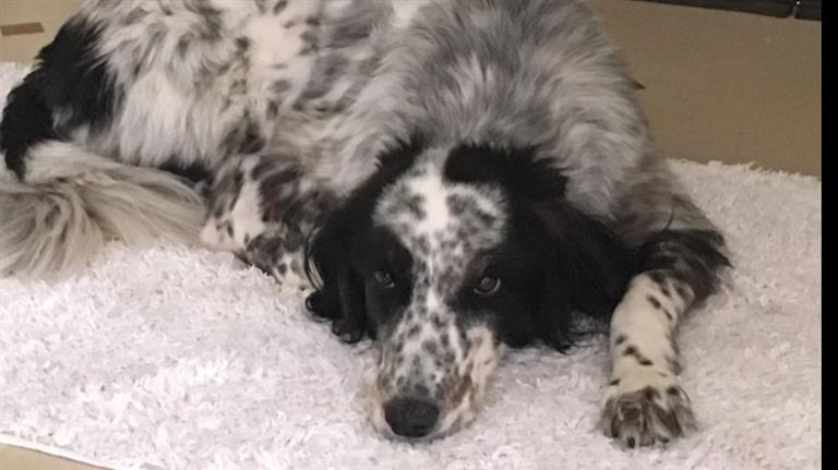 Ozlem Dog boarding, Pet Boarding, Dog Walking and Pet Sitting.
