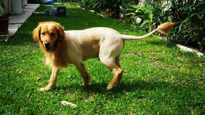 Foram Dog boarding, Pet Boarding, Dog Walking and Pet Sitting.