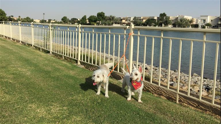 Consuelo Dog boarding, Pet Boarding, Dog Walking and Pet Sitting.
