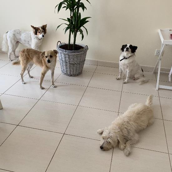 Consuelo Pet hotel experience in real homes! 10