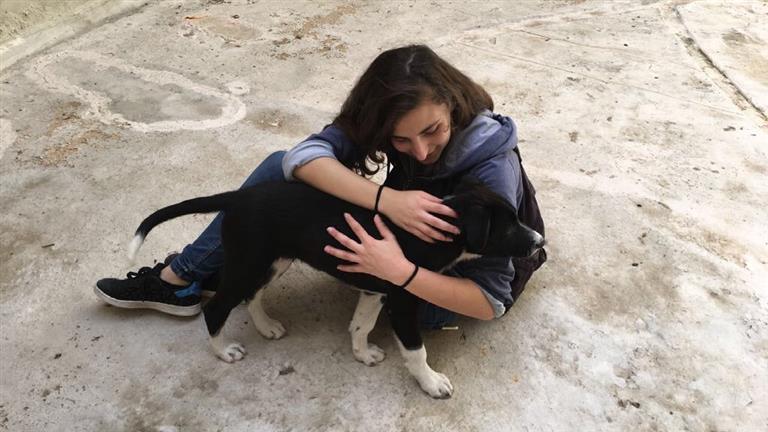 Hiba Dog boarding, Pet Boarding, Dog Walking and Pet Sitting.