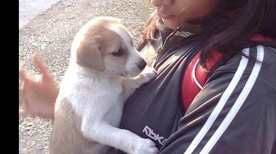 Shweta Dog boarding, Pet Boarding, Dog Walking and Pet Sitting.