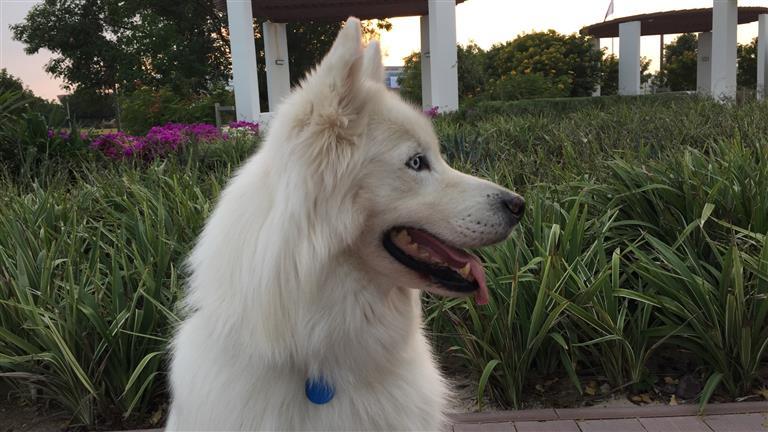 Suzanne  Dog boarding, Pet Boarding, Dog Walking and Pet Sitting.