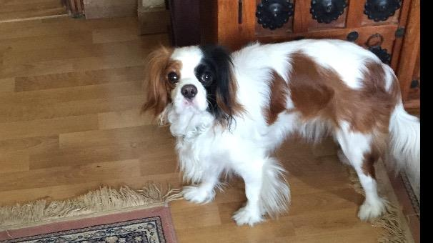 Lena Dog boarding, Dog Walking and Pet Sitting, Pets Second Home.