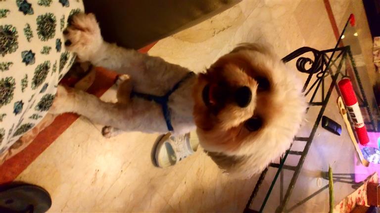 Kimmy  Dog boarding, Pet Boarding, Dog Walking and Pet Sitting.