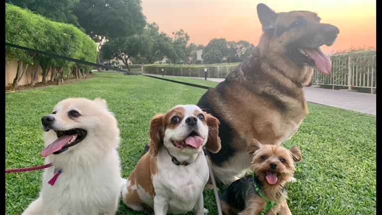 Roxane Dog boarding, Pet Boarding, Dog Walking and Pet Sitting.