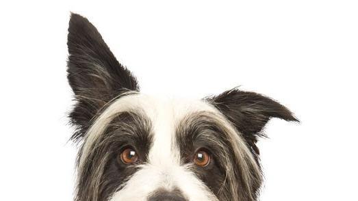 Natasha Dog boarding, Dog Walking and Pet Sitting, Pets Second Home.