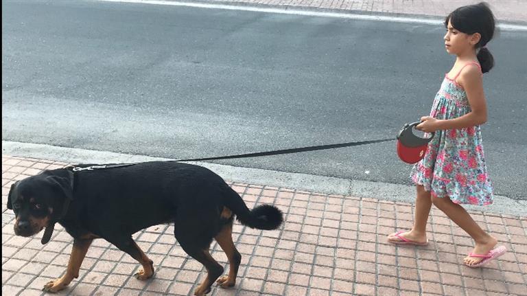 Bashar Dog boarding, Pet Boarding, Dog Walking and Pet Sitting.