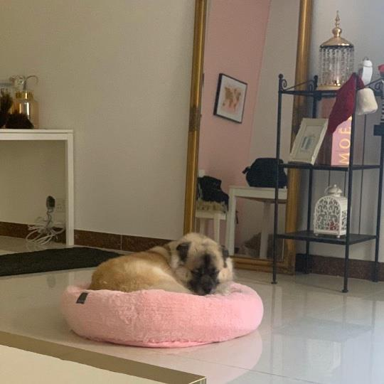 Bernadette-Rianna Pet hotel experience in real homes! 4