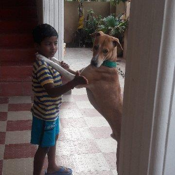 Rathika  Pet hotel experience in real homes! 3