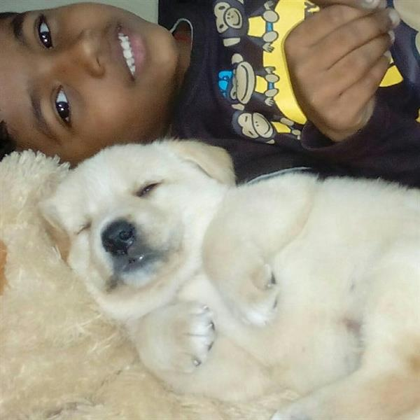Rathika  Pet hotel experience in real homes! 4