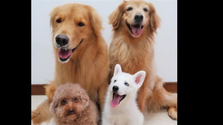 Kho Dog boarding, Pet Boarding, Dog Walking and Pet Sitting.