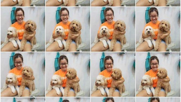 julie Dog boarding, Dog Walking and Pet Sitting, Pets Second Home.